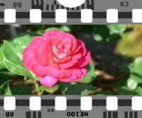 Locandina: Ciak in rosa. Film autobiografico