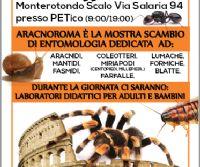 Locandina: Aracnoroma