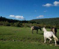 Locandina: Monte Castellano: tra le fioriture dei Lucretili