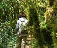 Locandina: Immersioni nel paesaggio