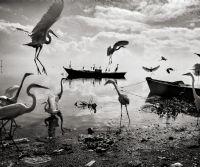 Locandina: The Darkroom Project #8