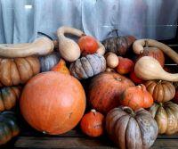 Locandina: Autumn holistic retreat