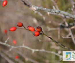 Locandina: Seconda giornata di riconoscimento di piante medicinali spontanee