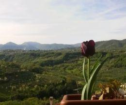 Locandina: Succede in Sabina