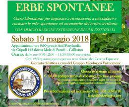 Locandina: Corso di riconoscimento erbe spontanee ed aromatiche
