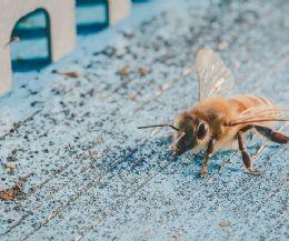 Locandina: Arriva il primo World Bee Day