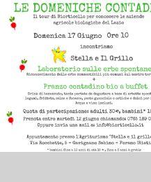 Locandina: Laboratorio sulle erbe spontanee