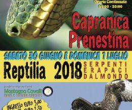 Locandina: Reptilia VIII ed. 2018