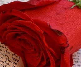 Locandina: Libri e Rose