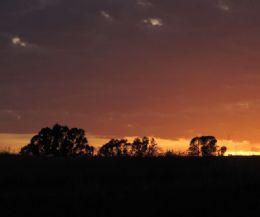 Locandina: Mitologia degli Alberi nella Riserva naturale Tevere Farfa