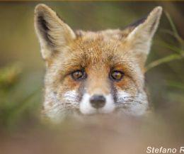 Locandina: Wild Europe