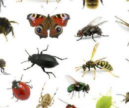 Locandina: Il mondo a 6 zampe: corso base di entomologia