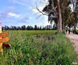 Locandina: Passeggiate ambientali nella Riserva Naturale Statale del Litorale Romano