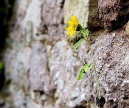 Locandina: Resilienza: la mia capacità di affrontare le difficoltà