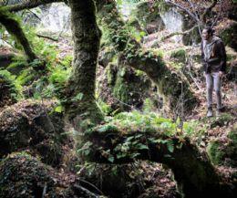 Locandina: Il bosco incantato