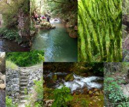 Locandina: Nella meravigliosa gola del Farfa (Monumento Naturale del Lazio), la panoramica Ferratina ed il pranzo estivo