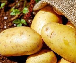 Locandina: La Patata di Leonessa