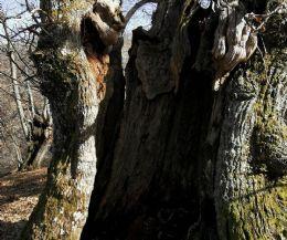 Locandina: Inventariato dalla Riserva Naturale Monte Navegna e Cervia