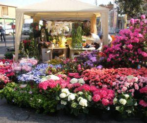 Locandina: Tor Lupara in fiore