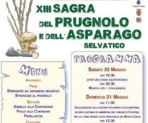 Locandina: XIII Sagra del prugnolo e dell'asparago selvatico