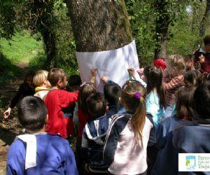 Locandina: La festa dell'albero