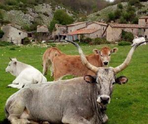 Locandina: Trekking a Cottanello
